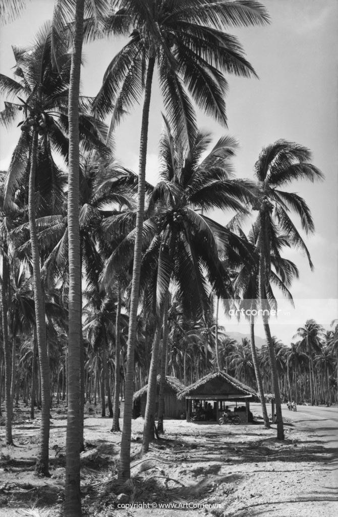 Nha Trang xưa - Dưới rặng dừa xanh - In the shade of coconut trees - Nha Trang - 1962