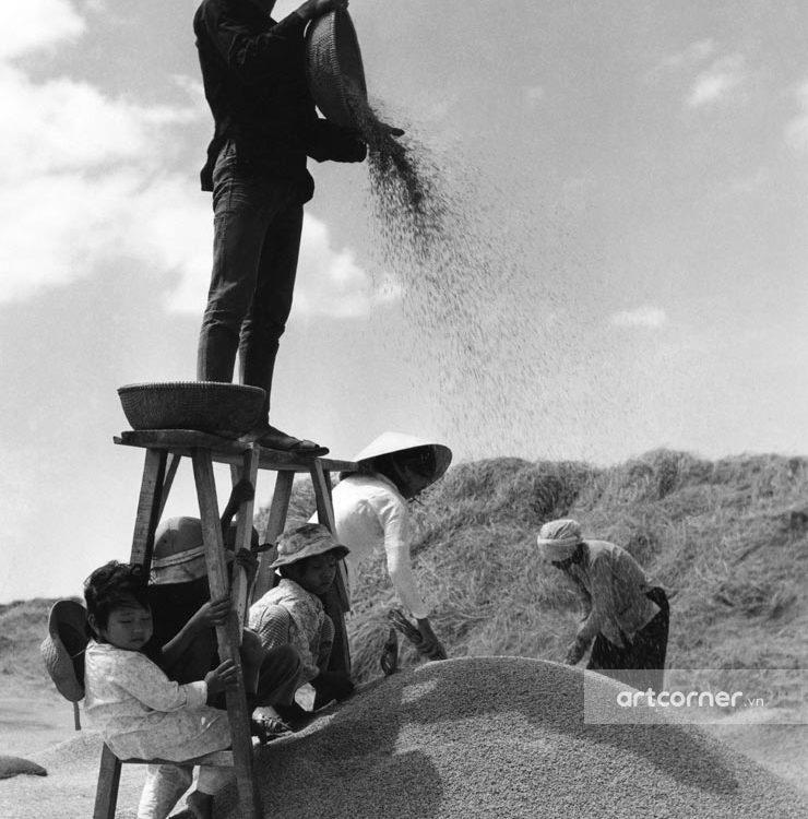 Nha Trang xưa - Giê lúa - Threshing - Nha Trang - 1960