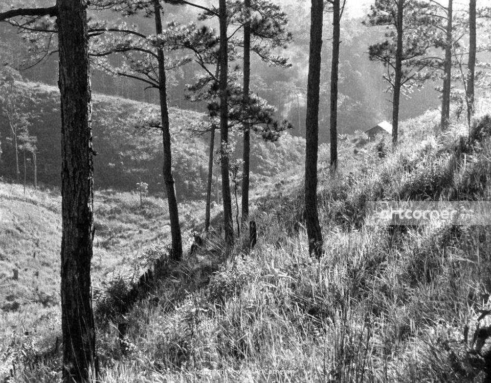 Đà Lạt xưa - Nhà Gỗ Bên Sườn Đồi - Đà Lạt - 1960