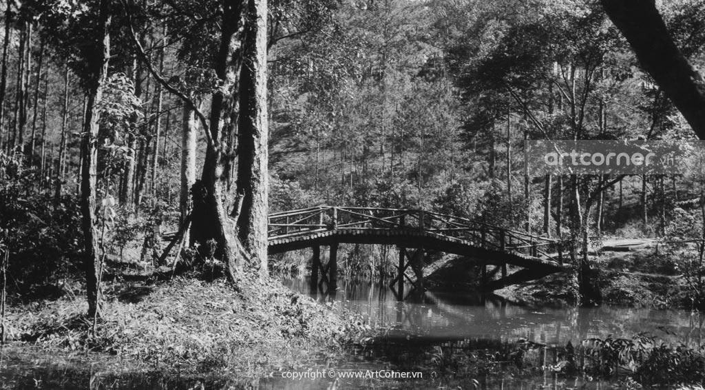 Đà Lạt xưa - Love Woods (Bois d'Amour) - Rừng Ái Ân - Đà Lạt - 1953