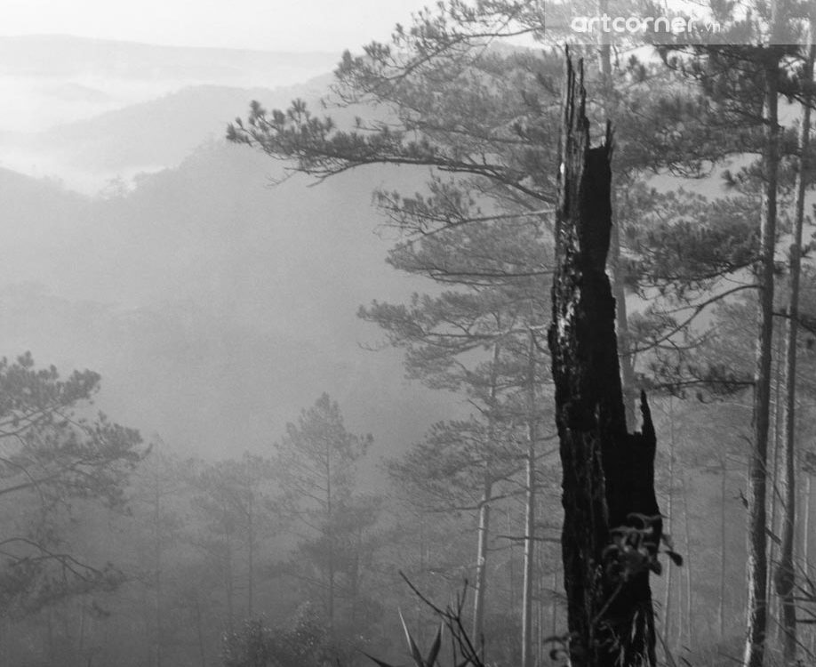 Đà Lạt xưa - Pine Forests - Rừng Thông - Đà Lạt - 1962