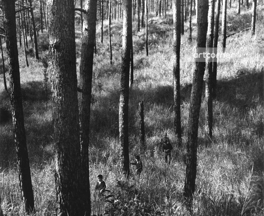 Đà Lạt xưa - Pine Forests - Rừng Thông - Đà Lạt - 1970