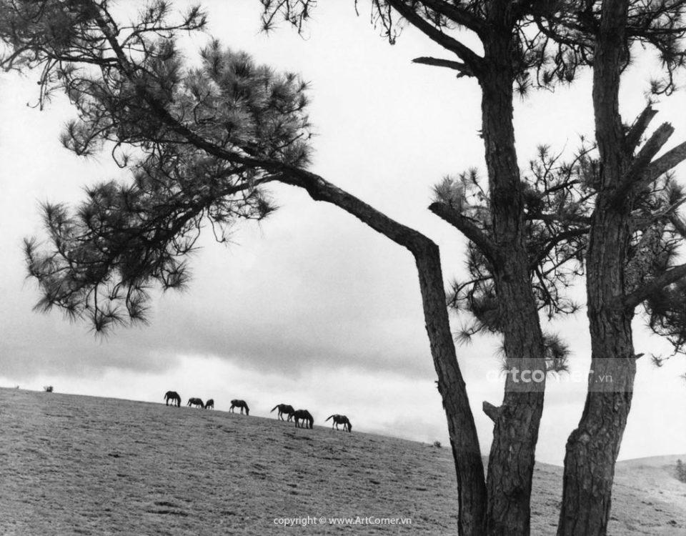 Đà Lạt xưa - A City of Thousand Pines - Thành Phố Ngàn Thông - Đà Lạt - 1957