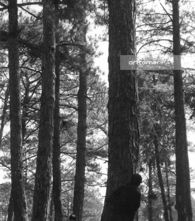 Đà Lạt xưa - The City With Thousands Of Pine Trees - Thành Phố Ngàn Thông - Đà Lạt - 1966