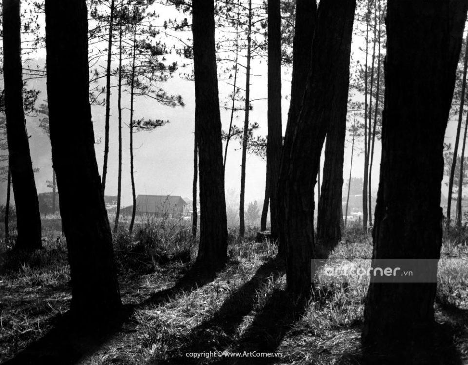 Đà Lạt xưa - Peaceful Atmosphere - Tĩnh Lặng - Đà Lạt - 1959