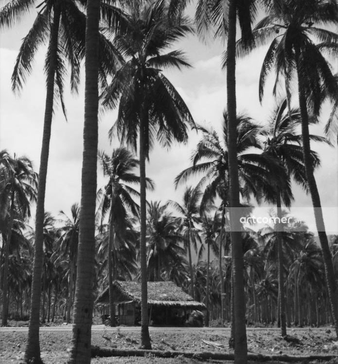 Nha Trang xưa - Rừng dừa Hiệp Mỹ - Cam Ranh - 1962