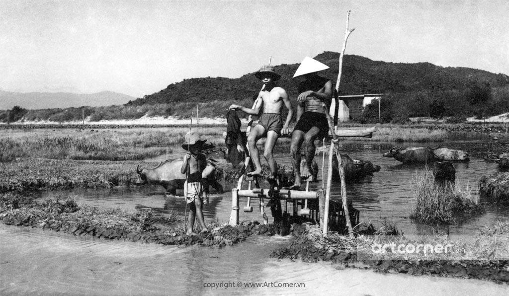 """Nha Trang xưa - """"Dẫn thủy nhập điền"""" bằng guồng đạp nước - Irrigation by water turbines - Nha Trang - 1957"""