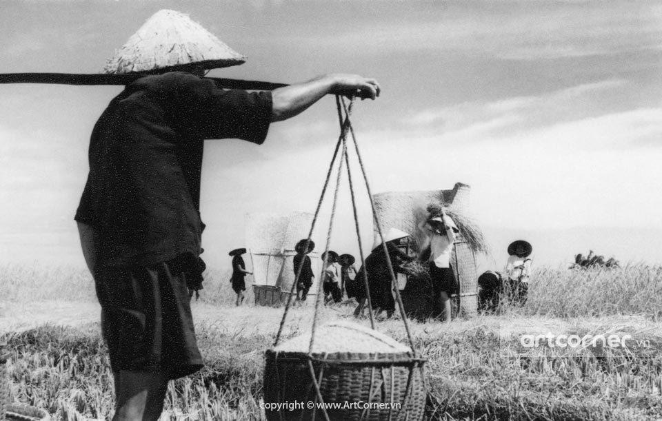 Nha Trang xưa - Mùa lúa chín - Nha Trang - 1959