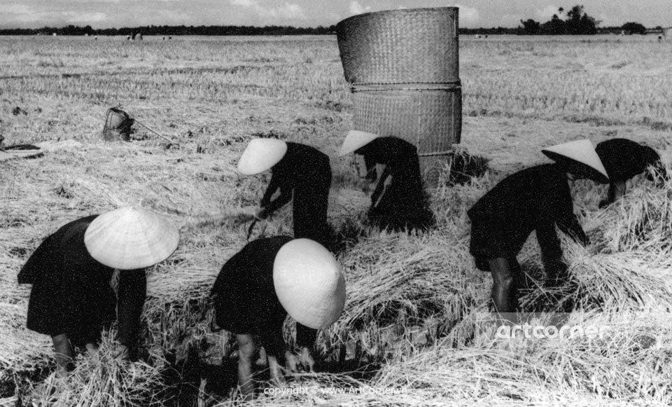 Nha Trang xưa - Việc đồng áng - Nha Trang - 1959